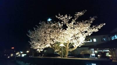 あづま荘の桜