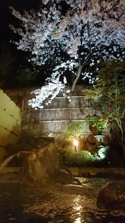 露天風呂の桜